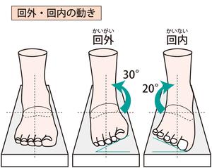 足関節回外・回内の動きのイラスト