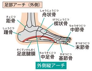 足部外側縦アーチのイラスト