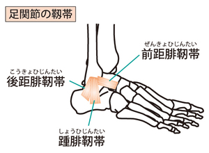 足関節外側側副靭帯のイラスト