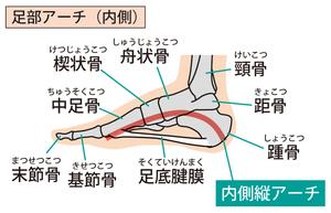 足部内側縦アーチのイラスト