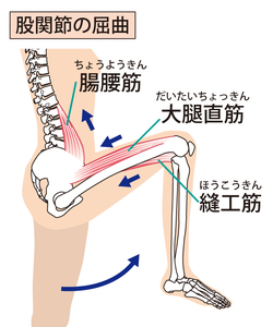 股関節屈曲の動作