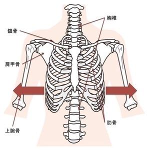 下位胸郭の呼吸に伴う肋骨の動き