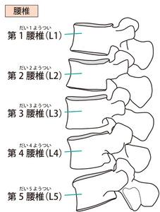 5つの腰椎のイラスト