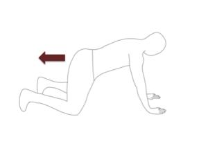 肩の下に手・股関節の下に膝がくるように四つ這いの姿勢をとります。