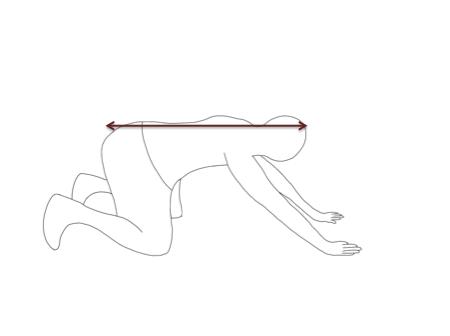 お尻を後方に動かします。この時、腰を丸めないように注意します。額が両手のラインを超えるまで動かしましょう