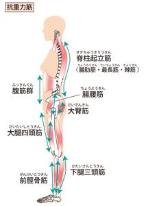 脊柱起立筋のイラストになります。身体を横から見た図です