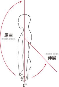 肩関節屈曲・伸展の動き