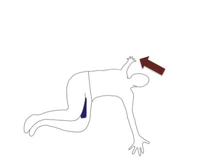 右肩を開き、上半身を捻ります。目標として、右の肩甲骨が床・ベッドに着くように動かしましょう