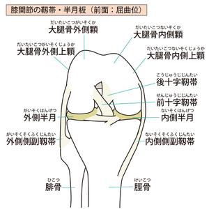 膝関節の靭帯・半月板