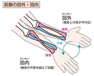 前腕回外・回内の動きの示したイラスト