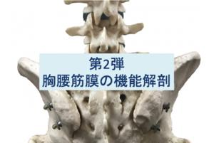胸腰筋膜の機能解剖第2弾のタイトル