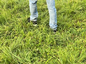 草むらを歩く男性