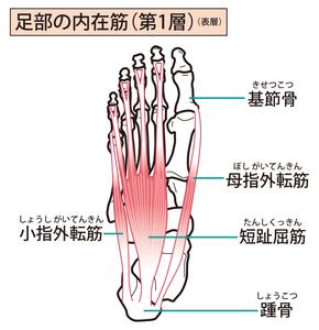 足裏の内在筋