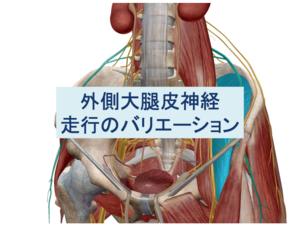 外側大腿皮神経走行のバリエーショントップ画像