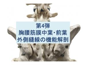 胸腰筋膜中葉・前葉・外側縫線の機能解剖第4弾のタイトル