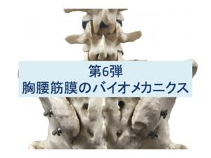 胸腰筋膜のバイオメカニクス:第6弾