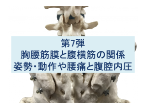 胸腰筋膜と腹横筋の関係:姿勢・動作や腰痛と腹腔内圧の関係:第7弾