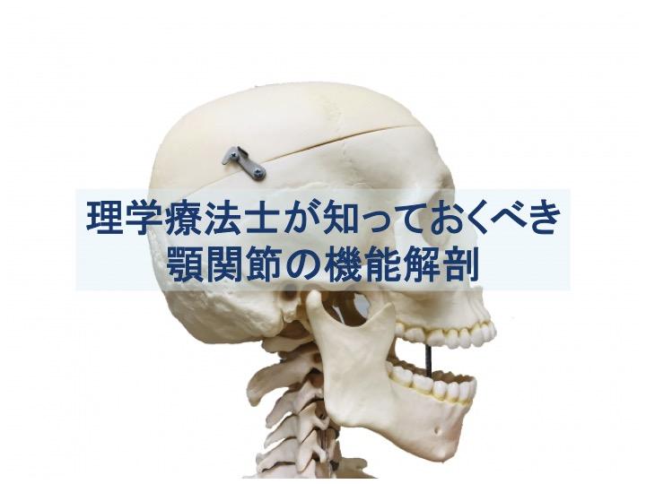 顎関節の機能解剖のトップ画像