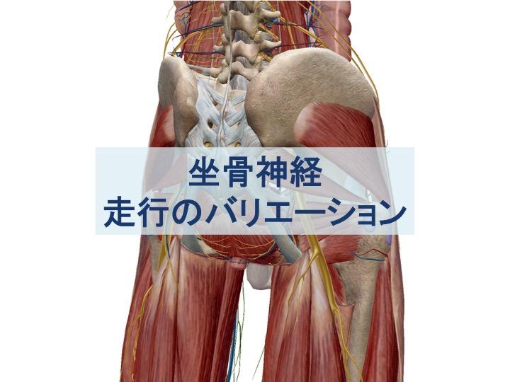 坐骨神経の走行バリエーションのトップ画像