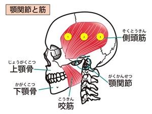 側頭筋のマッサージポイント