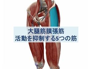 大腿筋膜張筋を抑制する5つの筋:トップ画像
