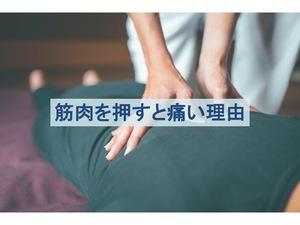 筋肉を押すと痛みが生じる原因のトップ画像