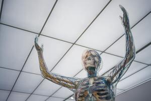 上半身の骨・神経の模型