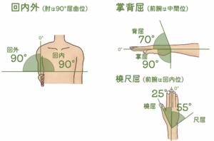 手関節・前腕の可動域のイラスト