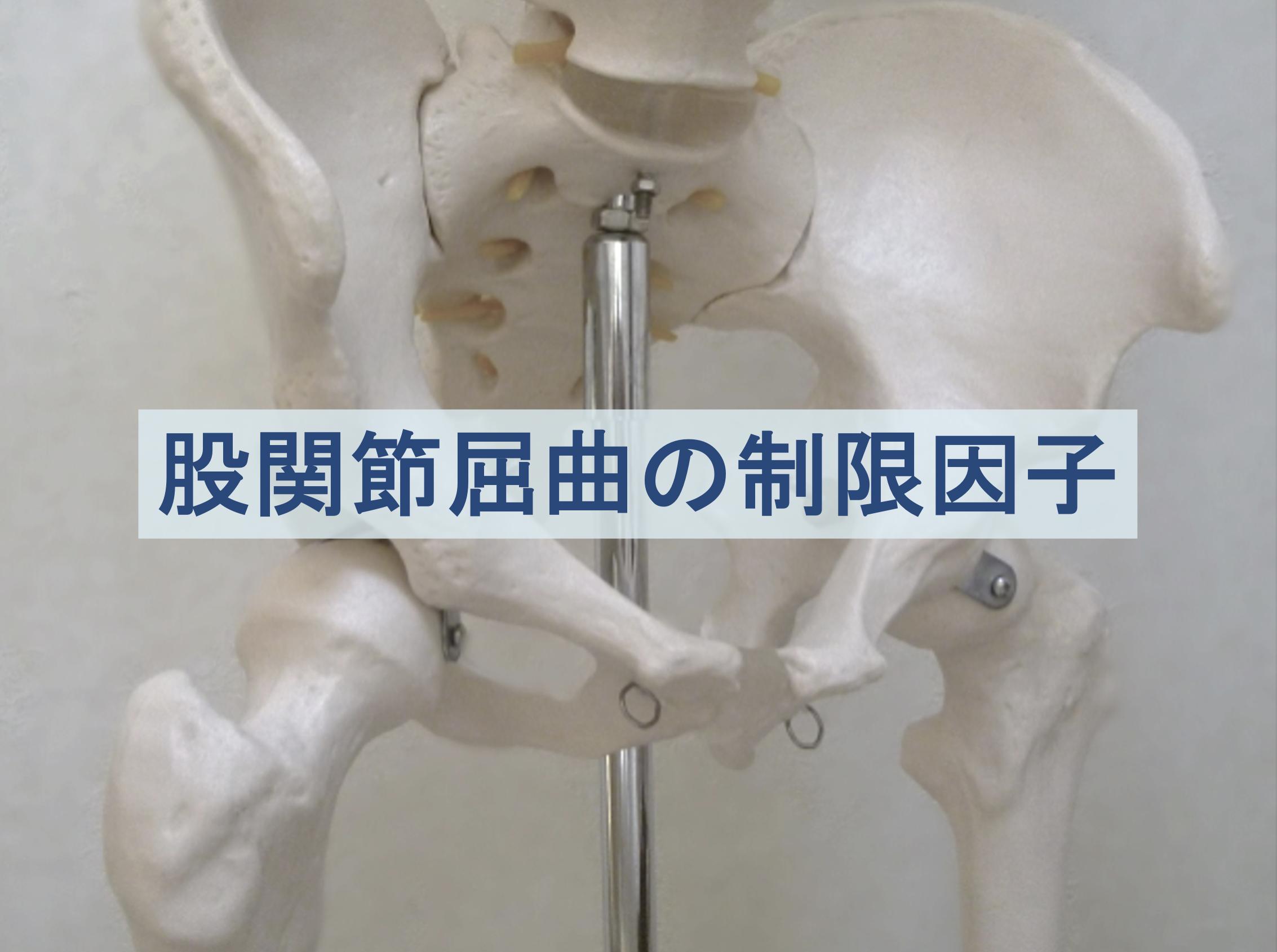 股関節屈曲の制限因子のトップ画像